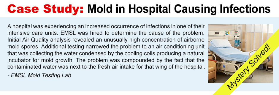 Case Study: Mold Lab