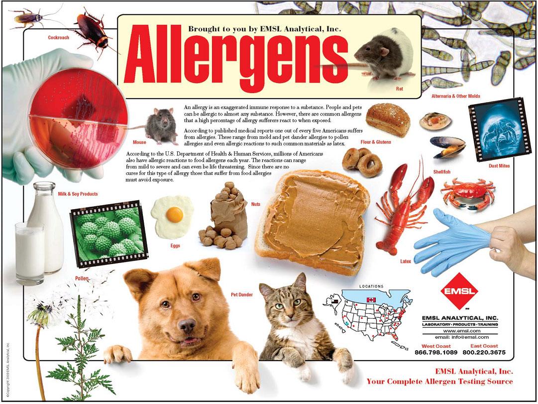 What Is Allergen Free Food